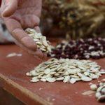 Vytvorte si svoju banku semien