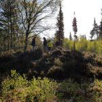 Holandskí archeológovia tvrdia, že na mieste s názvom Veluwe mohli žiť státisíce Rusov