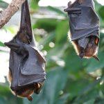 Vplyv LED osvetlenia na život netopierov