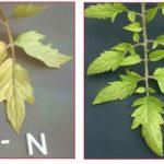 Pri pestovaní si všímajte listy rastlín