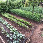 Problémy hnojenia kompostom a hnojom