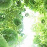 Fytoncidné vlastnosti rastlín