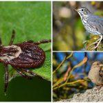 Prirodzení nepriatelia kliešťov v prírode