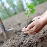 VÍrsku do roku 2040 vysadia 440 miliónov stromov